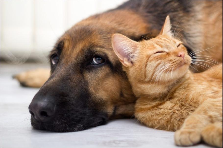 CBD-Öl für Haustiere