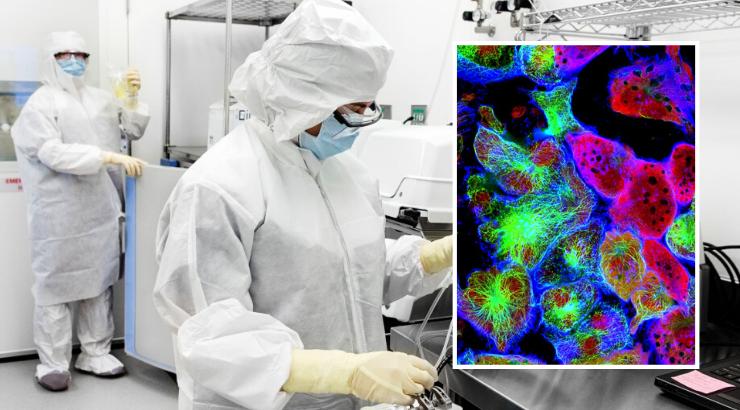 Neues Virus tötet jede Krebsart